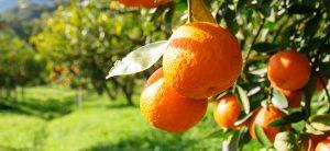 Transición hacia un sistema alimentario sostenible