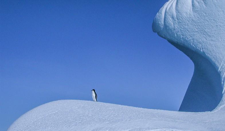 One lone Adelie penguin standing on the lip of an iceberg floating in Neko Harbor.  Taken in Neko Harbor, Antarctica